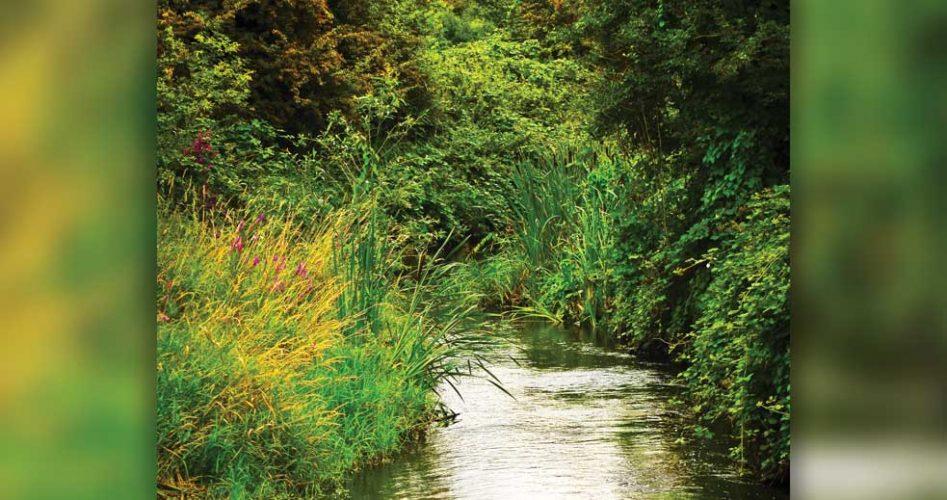 River-Roding-1