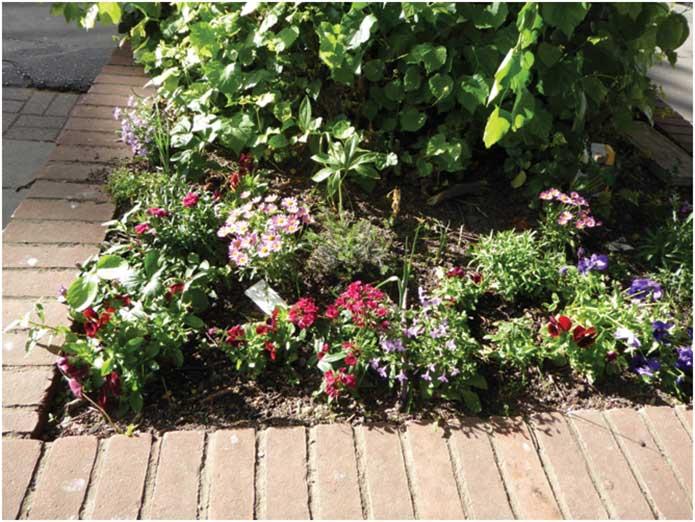 gardenimage