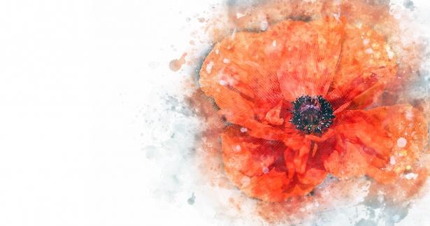 poppy-flower-1526212392Cf0